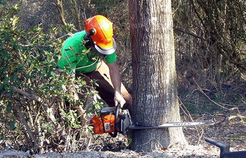 How To Find The Best Tree Services In Your Area?