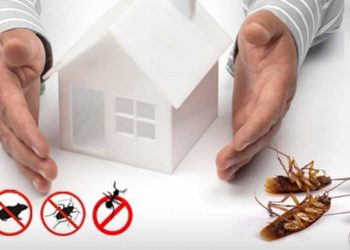 Create A Healthy Environment With Pest Control Services By Professionals