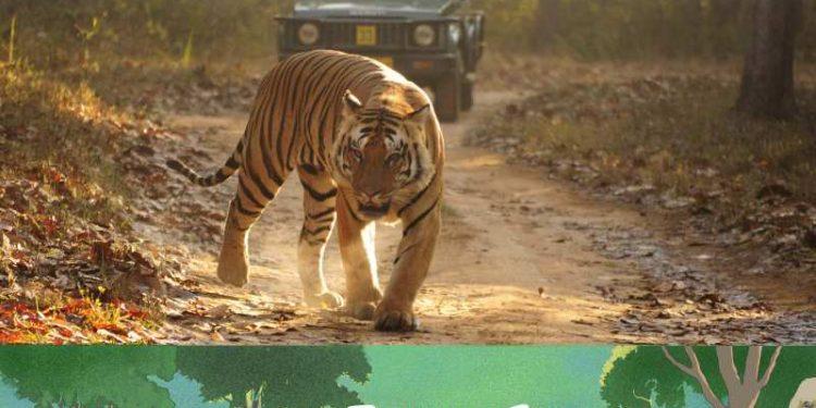 Jungle Safari Bandipur