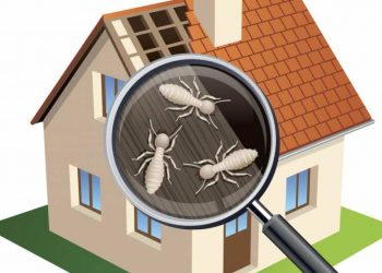 Top Things To Consider When Having Termite Inspections at Your Home