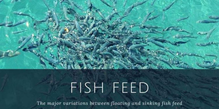 Fish feed – The major variations between floating and sinking fish feed