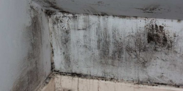 5 Places You Are Likely to Find a Mold Growth