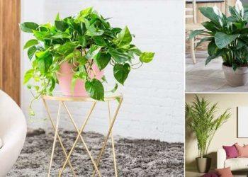Indoor Plants That Produce Oxygen